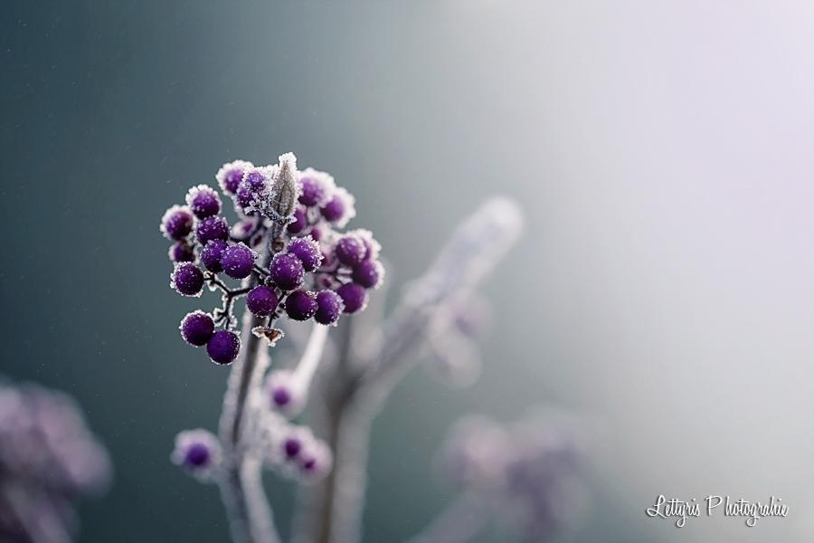 Fleurs macrophotographie